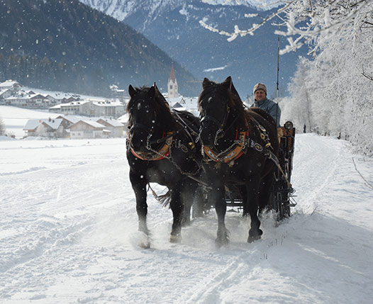 HORSE CARRIAGE OR SLEDGE TOUR